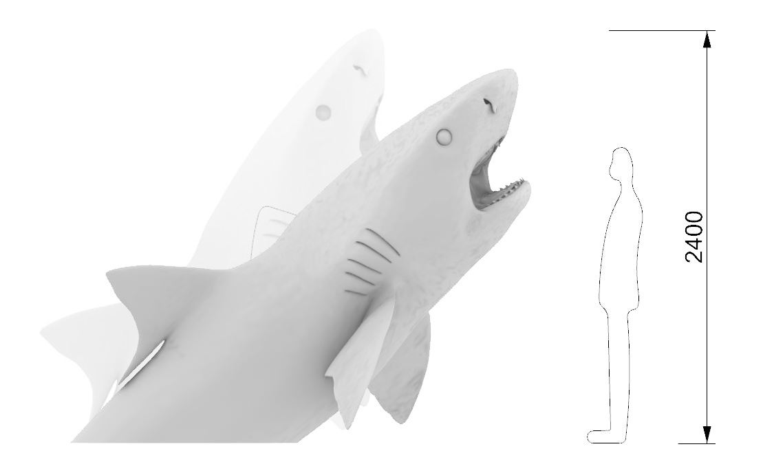 Tiger shark dimensions