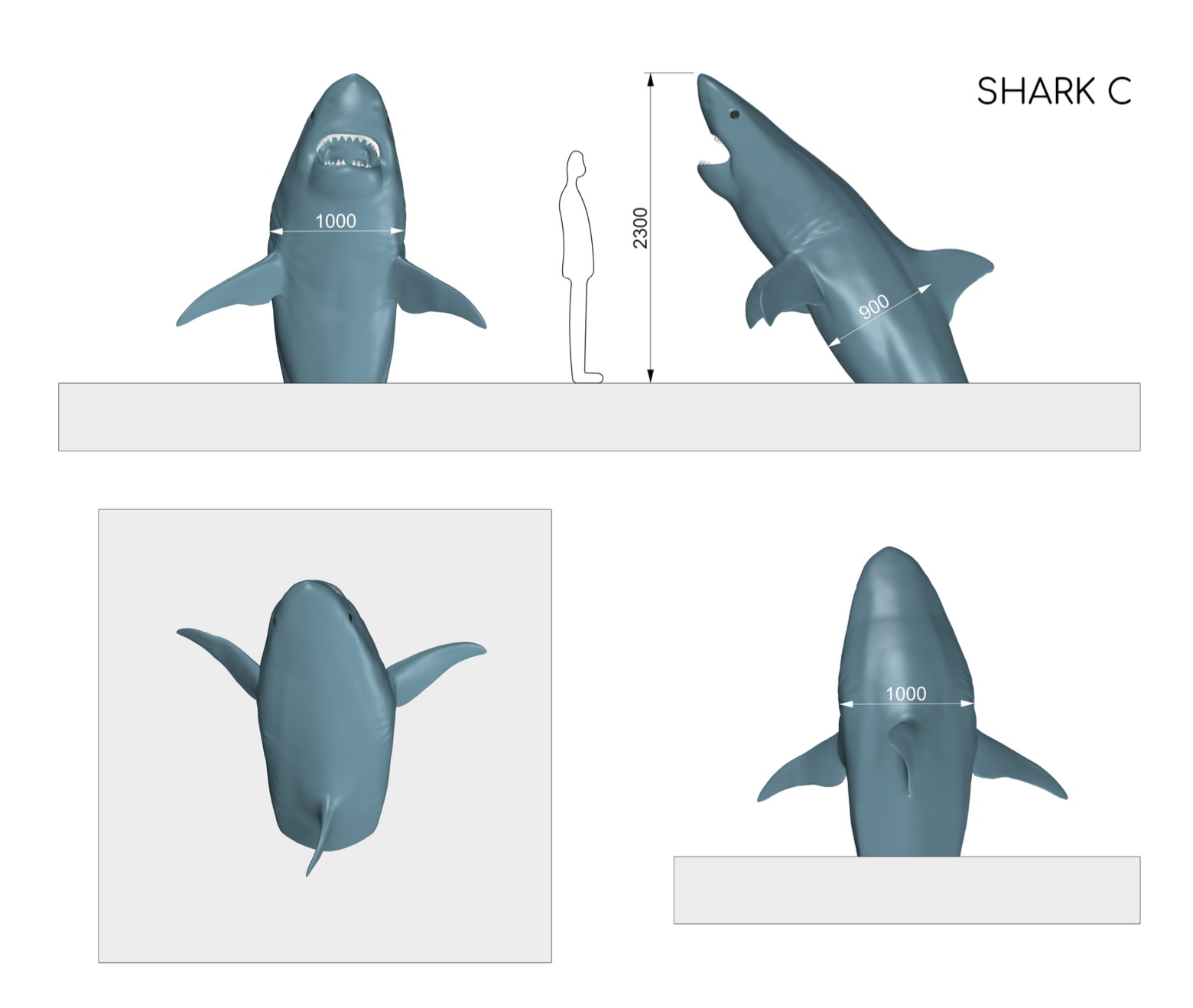 White shark dimensions